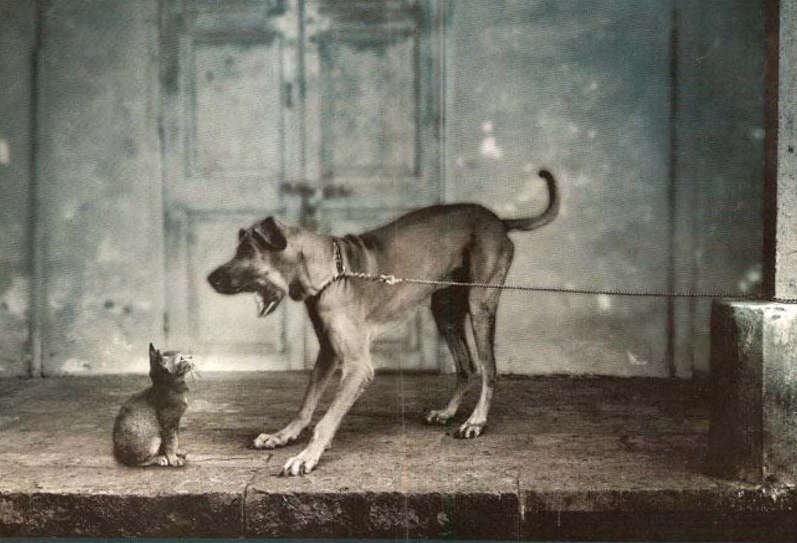 Knowledge-is-power dog and cat